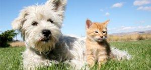 Pet_Care